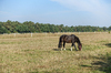 horse on grazing land