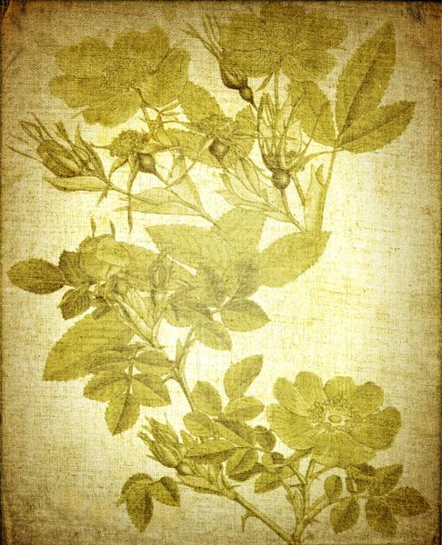 kostenlose stock fotos rgbstock kostenlose bilder botanischen druck auf leinwand hannak. Black Bedroom Furniture Sets. Home Design Ideas