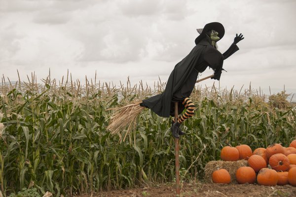 Witch and the Cornfield: Witch flying over a cornfield with pile of pumpkins in the corner