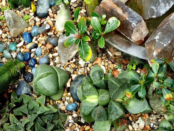 Stock De Fotos Gratis Cactus Y Suculentas Gardens25