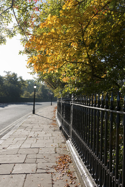London street in autumn: A street near Regent's Park, London, UK in early autumn.