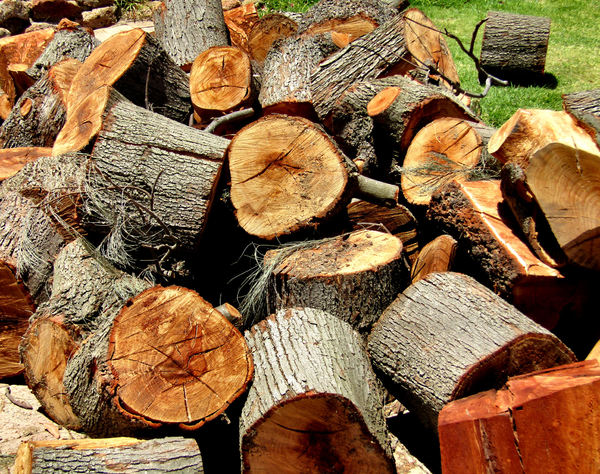 tree blocks1: freshly cut tree trunk wood blocks – tree lopping