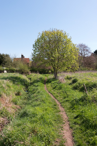 The path home: A homebound rural footpath in spring in Surrey, England.