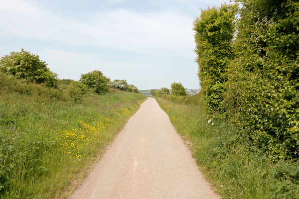 Cycle path: The Camel Trail cycle route in Cornwall, England, in spring.