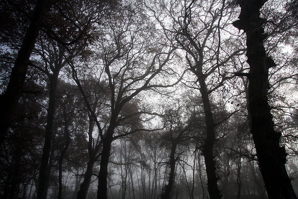 Foggy wood 1: Foggy wood