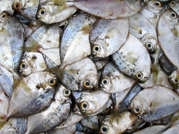 Gratis stock foto 39 s rgbstock gratis afbeeldingen for Edible hawaiian fish