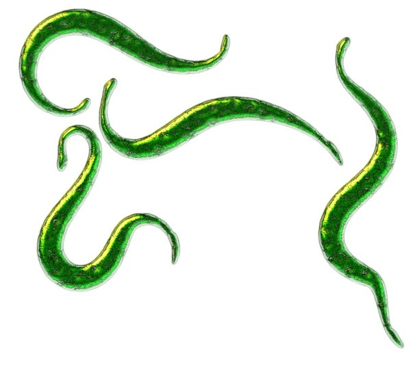 Decorative little snake-like s: Decorative snake-like calligraphic strokes with green texture.