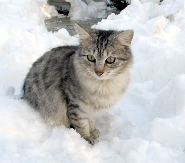 In the snow2: my kitten braving the snow