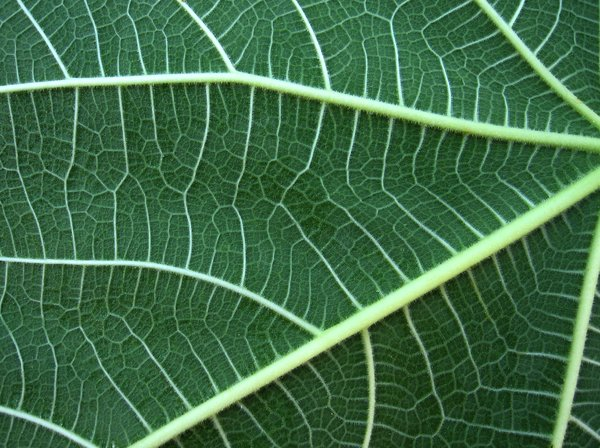 adams leaf 3: none