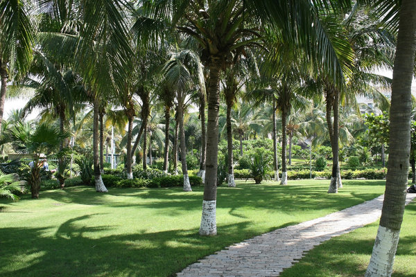 Palm garden: Palms in a garden on Hainan Island, China.