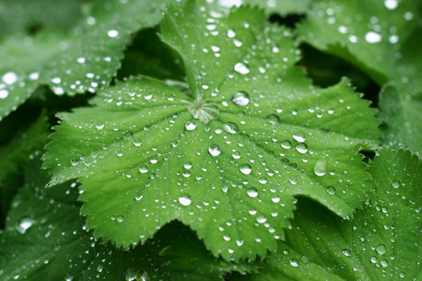 waterdrops on leafs: after the rain there is always some beauty somewhere