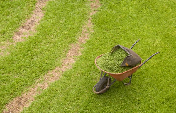 Wheelbarrow and grass: Wheelbarrow lying in lawn, filled with just-mowed grass