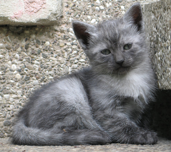 grey kitten: none