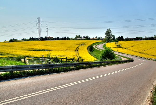 Rape and road - HDR: Road passing through rapefields. The picture is HDR using three images.