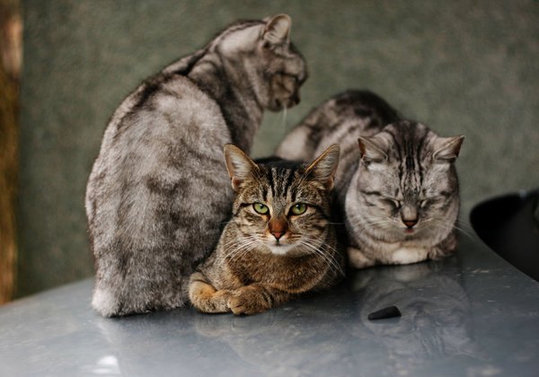 three cats: none