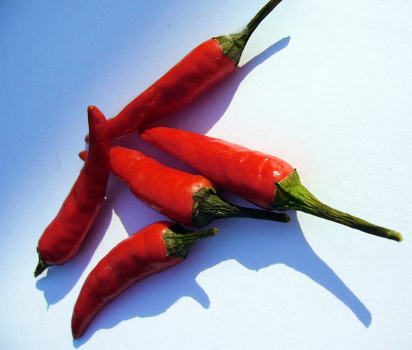Hot Stuff: Some very hot Birds Eye Chilli's