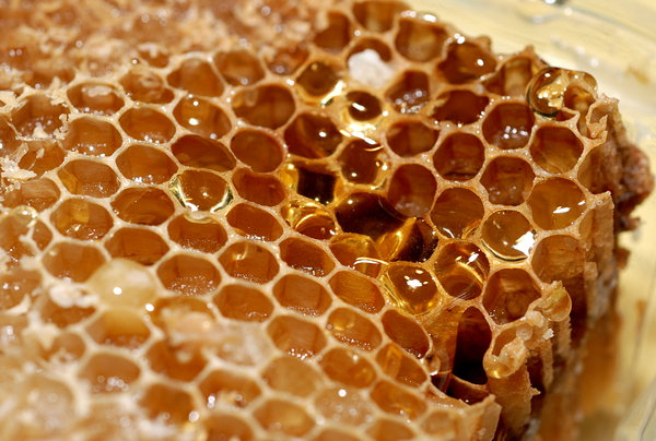 Honeycomb 3: Close-up of honeycomb