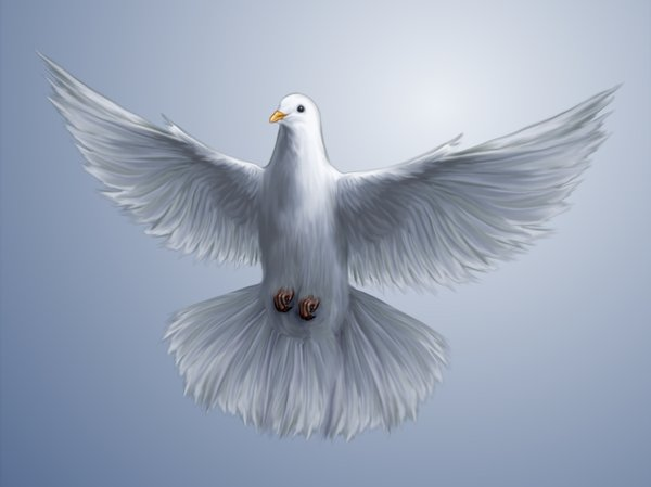 Dove wallpaper: Simple Dove Wallpaper