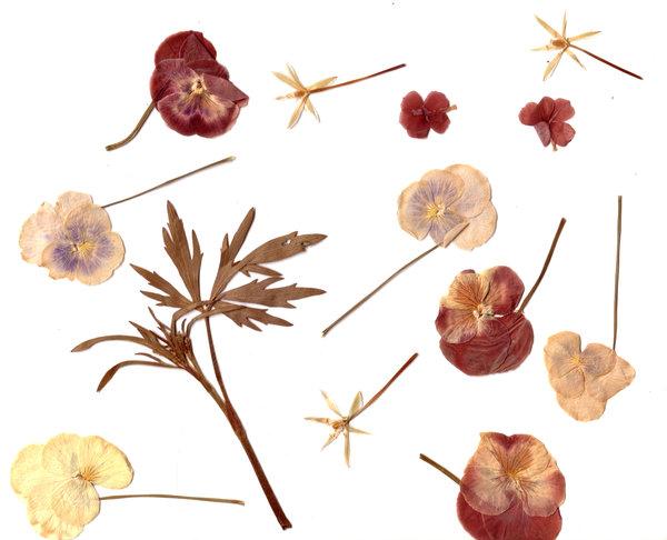 Gratis stock foto 39 s rgbstock gratis afbeeldingen herbarium rocanonz february 16 - Model herbarium ...