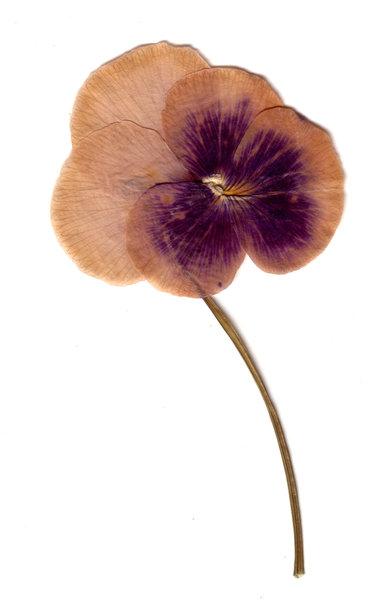 Kostenlose stock fotos rgbstock kostenlose bilder herbarium rocanonz february 16 - Model herbarium ...