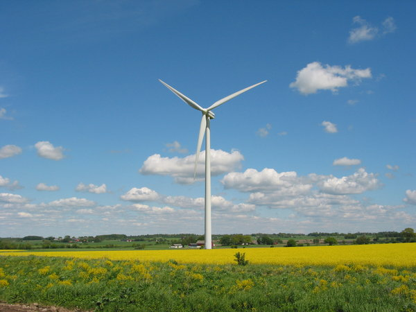 wind mills and yellow field 2: wind mills and rape seed field in Southern part of Sweden. 2006-06-02-