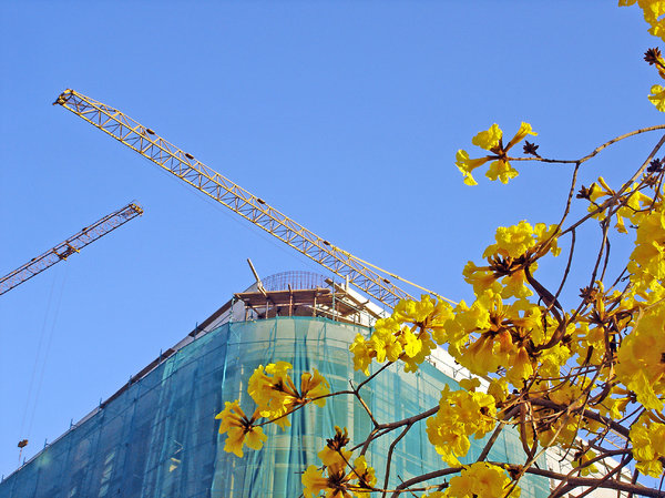 Construction in bloom: Downtown Beirut
