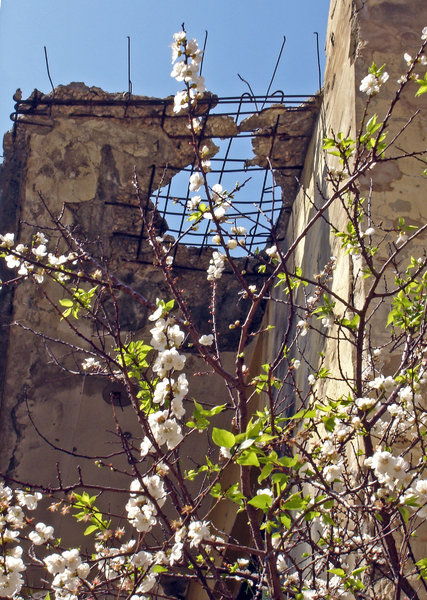 Revival: An old abandoned house in tune with spring