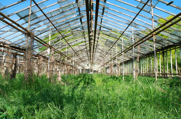 weedhouse 1: Series with photos from abandoned greenhouse facility in Kävlinge, Sweden.