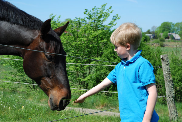 Boy and Horse 1: Boy and Horse.