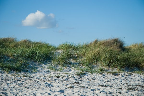 Dunes on beach: Grass-covered sand dunes on beach, Falsterbo, Skåne, Sweden