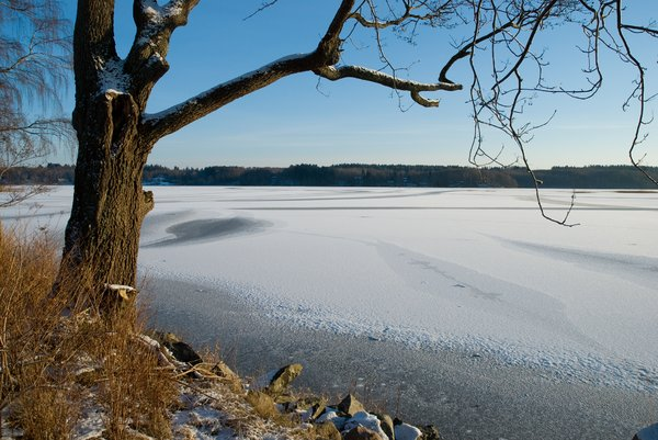 Winter Lake: Lake in southern Sweden (Örkelljunga, Skåne).
