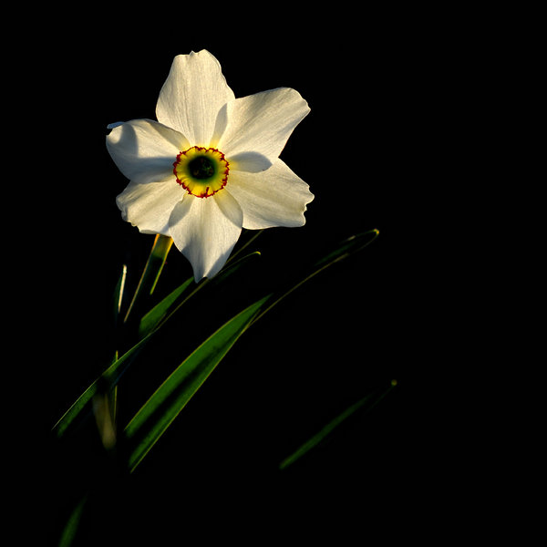 Narcis: Light can penetrate its darkness