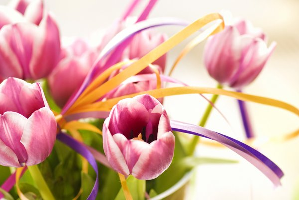 Backlight tulips: Bunch of festive tulips