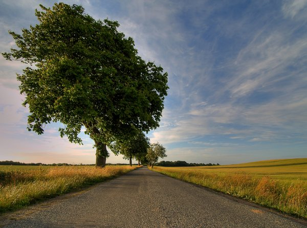Road, crop and tree - HDR: The picture is HDR