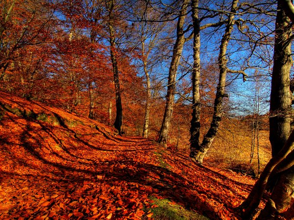 Autumn forrrest - HDR: No description