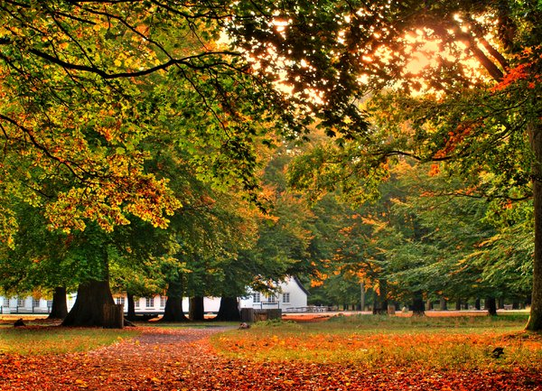 Forest house in Autumn - HDR: A forest house in a wildlife park, all dressed up on autumn colors