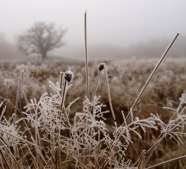 Frost and mist: No description