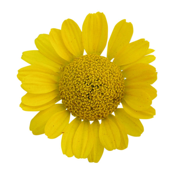Flower: A yellow flower! Please let me know if you decide to use it!
