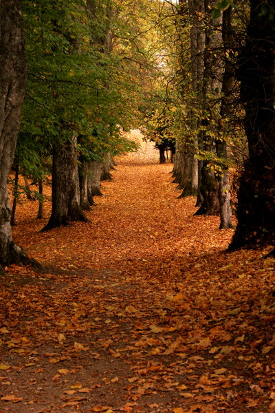 Autumn Avenue: http://www.scottliddell.n ..