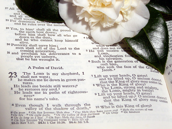 Psalm: reading Psalms in the morning light