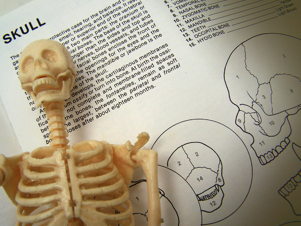 Skeleton Study 2: skeleton model on study page