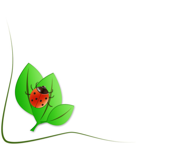 Texture bug: ladybird illustration on white background