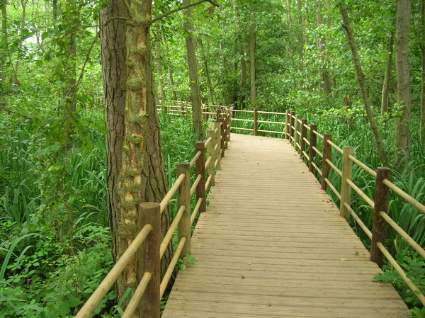 Woodland walk: A boardwalk path in some woodland