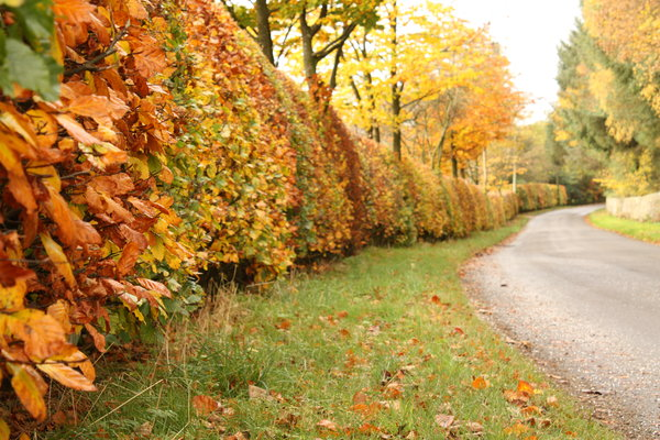 Autumn Lane: View of a Scottish country lane in Autumn