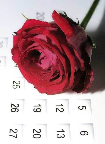For ever: rose on calendar