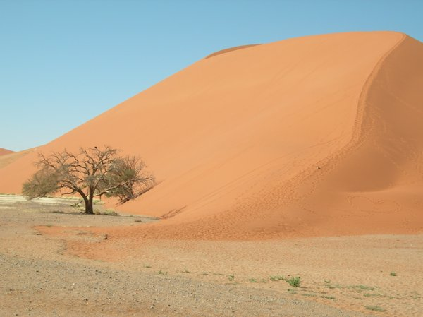 namib desert 4: Dune 45 in Namib desert is the worlds highest sand dune