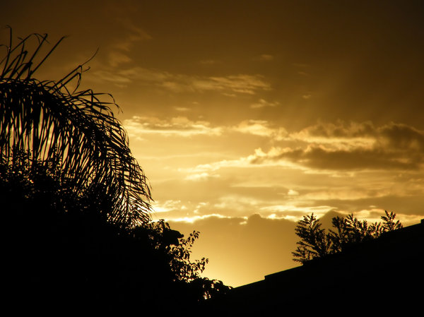 black and gold: Autumn sunset