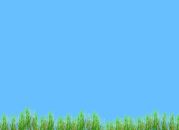 Spring Grass, Blue Sky: Green grass tops against a blue sky. Spring and summer background.