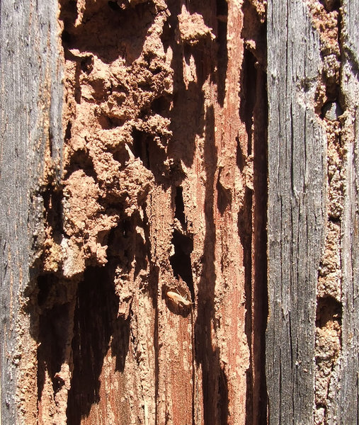 appetite for damage 5: termites and the damage they cause