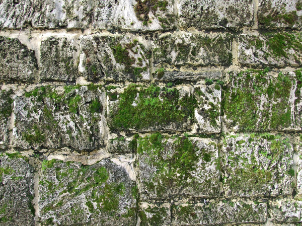 wall moss 2: stone wall covered with moss